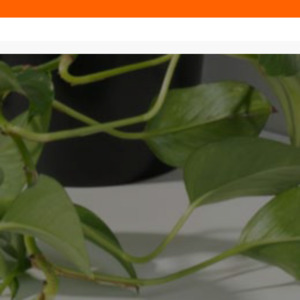 cocoonproducts.com.au
