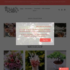 Ollie's Blooms & Plants