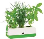 Kitchen Herb Grower - 320 x 100 x 100mm $9 + $13 Delivery @ Green Life