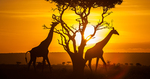 Win a Trip for 2 to Kenya (Valued at $18,579) from Discover Kenya