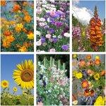 Cottage Garden Flower Seed Mix (6 Varieties) $12 (Was $22) + Bonus Marigold + Free Shipping @ Veggie Garden Seeds