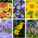 Flowers for The Bees Seed Pack (6 Varieties) $12 (Was $21) + Free Shipping (Excludes WA & NT) @ Veggie Garden Seeds