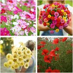 Cut Flower Seed Pack (4 Varieties) $10 + Free Shipping @ Veggie Garden Seeds (Excludes NT & WA)