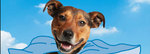 Win 1 of 5 Essential Dog Care Packs from RSPCA NSW