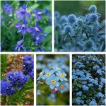 Flower Seed Value Pack (5 Varieties) Including Sea Holly $10 + Free Shipping @ Veggie Garden Seeds (Excludes WA/NT)