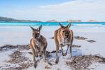 [SA] Kangaroo Island Wildlife Adventure Tour (from Adelaide) - 2 Day 1 Night - $315 (Save $80) @ Backpacker Deals