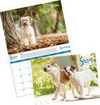 2019 Rescued Dog/Cat Calendar $10 (Was $20) + Delivery @ Save-A-Dog Scheme
