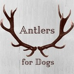 Free Postage on Antlers for Dogs Medium($19), Large ($30) @ Fur Legged Family