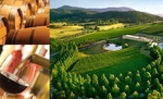 $88 for a FULL day Yarra Valley tour including lunch at Fergusson's Winery. Normally $176. Vic