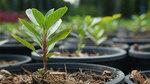 [NSW] Free Tree Giveaway (Greater Sydney Region) @ Bunnings Warehouse via NSW Planning Portal