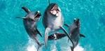 Half Price Tickets to Sea World, Warner Bros Movie World & Wet'N'Wild