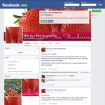 Pick Your Own Strawberries - $10 a Tray (up to 7kg), Bullsbrook WA