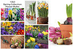 150 Pack of Ready-to-Plant Flower Bulbs Now $18 Plus $5 Shipping @ My Discount Store