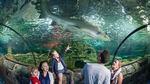 2 for 1 Tickets - Sealife Sydney, Melbourne & Sunshine Coast Aquariums