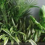 [VIC] 20% off ALL Indoor Plants (No Minimum Spent) Delivered across Melbourne @ Ollie's Blooms & Plants
