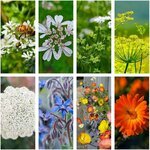 'Feed The Bees' Veggie, Herb + Flower Seed Pack (7 varieties) $15 + Free Shipping @ Veggie Garden Seeds (excludes WA + NT)