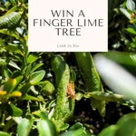 Win a Finger Lime Tree from Melbourne Bush Food