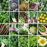 Mega Autumn Veggie, Herb + Flower Seed Pack (22 Varieties) $35 Shipped (Was $75) @ Veggie Garden Seeds (Excludes WA / NT)