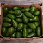 [NSW, VIC] 10kg Avocados for Whatever Price You Want + $15 Shipping @ The Avo Club