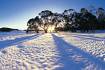 Lake Mountain Snow Tour from Melbourne $99 Per Person (Was $135) @ Backpacker Deals