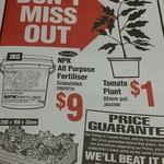 Tomato Plant (85mm Pot) $1 @ Bunnings Warehouse