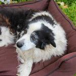 Bamboo Pet Bed Medium $40 + Free Shipping (Was $80) @ Koala Bamboo