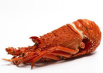 [NSW] Cooked Lobster (Min 350g) $22.99 + Delivery (Free over $100) @ Harris Farm