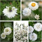White Flower Seed Pack (5 Varieties) $12.50 + Free Shipping @ Veggie Garden Seeds (Excludes WA/ NT)