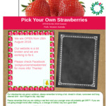 [WA] Pick Your Own Strawberries - $10 a Tray (up to 6kg), Bullsbrook