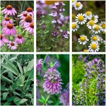 Medicinal Herb / Flower Seed Pack (6 Varieties) $12 (Normally $21) + Free Shipping (Excludes WA & NT) @ Veggie Garden Seeds
