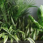 [VIC] 20% off All Indoor Plants (No Minimum Spend) + Delivery/Pickup @ Ollie's Blooms & Plants (Glen Waverley)