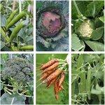 Autumn Veggie Seed Pack (6 varieties) $14 + Free Shipping @ Veggie Garden Seeds (exclude NT/ WA)