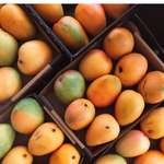 NSW Harris Farm $10/Tray of Honey Gold Imperfect Mangoes