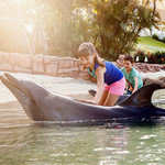 [QLD] Movie World/Sea World/Wet N Wild/Paradise Country - $80.99 @ Living Social (Using App)