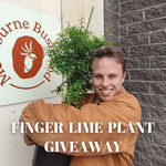 Win a Finger Lime Tree Worth $120 from Melbourne Bushfoods