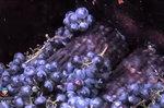 Free Winemaking Course - Online MOOC > University of Adelaide
