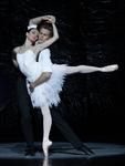 Free Online Show Swan Lake by The Australian Ballet
