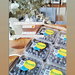[NSW] Blueberries $10 for a Box of 12 Trays @ Harris Farm (Selected Stores)