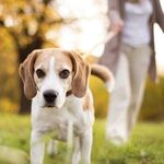 FREE: Dog Microchipping for Ipswich City QLD Council Residents