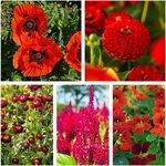 Scarlet Flower Seeds Value Pack (5 Varieties) $10 + Free Shipping @ Veggie Garden Seeds (Excludes WA/NT)