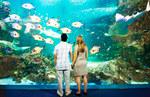 Up To 50% off Sydney Tower/Wildlife World/Sydney Aquarium (Time Restrictions)