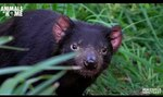 Free Virtual Tour of Healesville Sanctuary @ Zoos Victoria YouTube