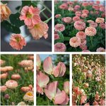 Salmon Flower Value Seed Pack (5 Varieties) $10 + Free Shipping @ Veggie Garden Seeds (Excludes WA + NT)