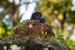 Win a Suunto 9 Multisport GPS Watch Worth $899.99 from Tempo Journal