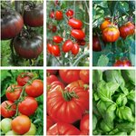 Tomato Seed Pack $10 Shipped (Was $22.25) @ Veggie Garden Seeds