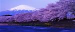 QANTAS 8 Hour Flash Sale to Japan (Tokyo & Osaka) + $50 off (e.g SYD - TYO Return $610 16 May - 20 May) @ Skiddoo