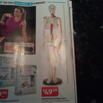 Human Skeleton Model 85cm ALDI Special Buys (33.5 Inches) $49.99 Starts 20th of Feb