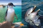 PERTH Penguin Island and Dolphin Watch Adventure Cruise for One $39, Two $78 or Four People $156