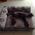 Large Pet Bed $60 at Costco - 91.4cm X 106cm Very Good Quality