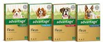 Advantage Dogs Up To 4kg Green 4 Pack $16.00 + $7.40 Shipping @ Petceutics (Normally $35-45)